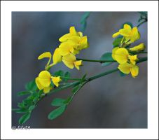 autumn yellow by biba59