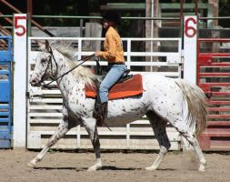 Horse Show Stock 014 by Notorious-Stock