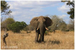 Africa 13: The Elephant II by JR-Dept