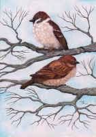 Sparrows by TKRabe