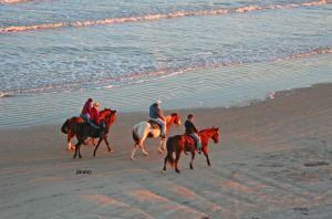 Beach horse riding by jcphotos