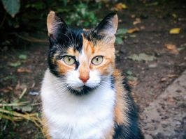 Portrait of a cat 2 by V-Shine