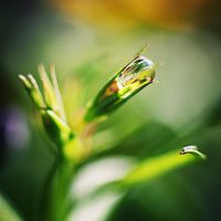 drop in green. by gloeckchen