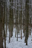 Winter Landscape 0003 by poeticthnkr