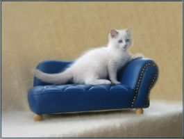 Ragdoll siiting on a couch by YviChan