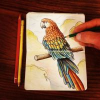 Parrot Sketch by BenHeine