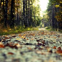Autumnatic by PatrickRuegheimer