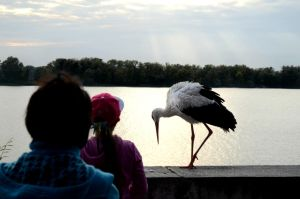 Picture with stork by AdolphVZolotom