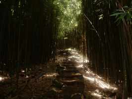 Bamboo forest by knite1