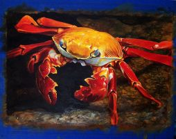 Sally Lightfoot Crab Painting by stevegoad