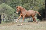 44 Stretching out gallop by Chunga-Stock