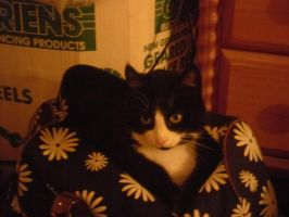 My Cat likes to hide in bags by musasgal