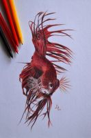Siamese fighting fish by 22Zitty22
