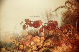 Autumn by keillly