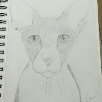 Sphynx Quick Sketch by Gothic-Night-Raven