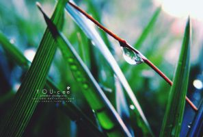 YOU-cee: Morning Dew by YOU-cee