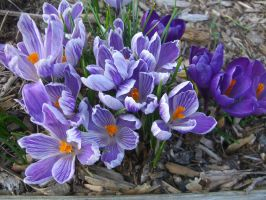 Spring 4 by chasz