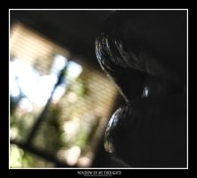 Window of my Thoughts by x-xMELx-x