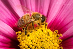 Of Flowers and Bees by OliverBPhotography