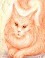 Maine Coon by Manticora-Miorro