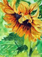 Sunflower by danuta50