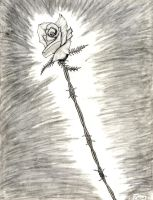 Iron Rose by Zaxnot