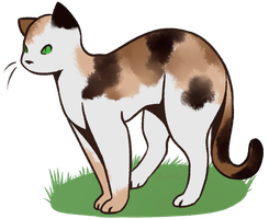 [OPEN] Adopt: Cat by MiqotesosAdopts