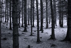 Bastogne Forest by scotto
