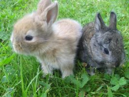 Baby bunnies by mirry92