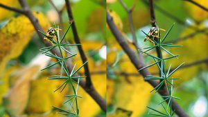Stereoscopic Wasp by danielmercieca