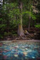 Avalanche Creek by Jacob-Routzahn