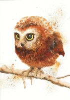 Little owl - Watercolor by TinyTami