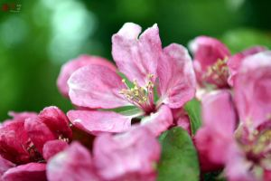 Blossom by RoseRedPhotography
