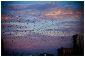 Bats by AfterDeath