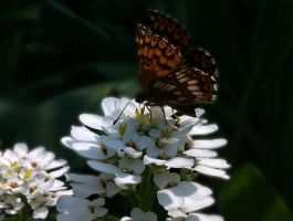 Flower and butterfly by PatricijaF