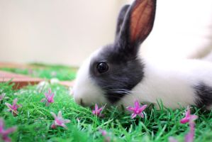 Tiny Rabbit in the tiny garden by Janjanita