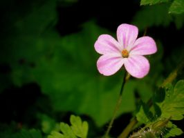 delicate pink by aripi