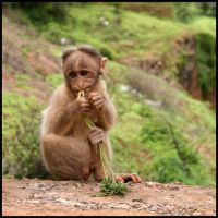 I'm on a Diet by AbhaySingh1