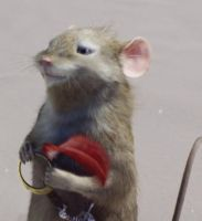 Reepicheep the mouse by Reepicheep-of-Narnia