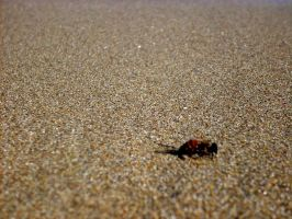 bee on the wet sand by MiCiA-DeSign