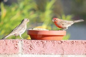 Finches Love by angelwith1morea15