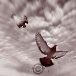 Peregrine Attack by taykut
