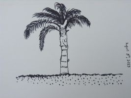 Palm Tree #1 by mifortin