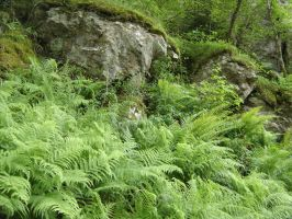 Ferny Slope Kin Boulders in Scotland by Forest-Imp