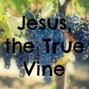 Jesus, the True Vine by 1234RoseSmith
