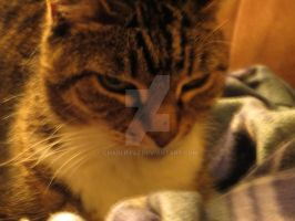 Cat and Blanket by Charlief43