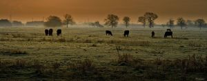 Early Morning Mist by Phil-Norton