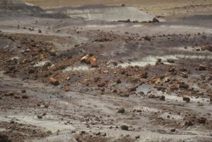 Petrified Forest by SuperScoobyGirl
