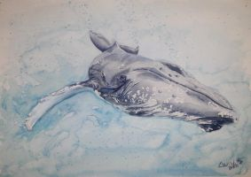 Humpback by dareith
