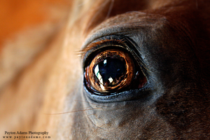 Horse Eye by PaytonAdams1